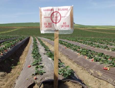 Photo of strawberry fields