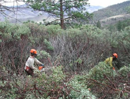 forest workers removing brush